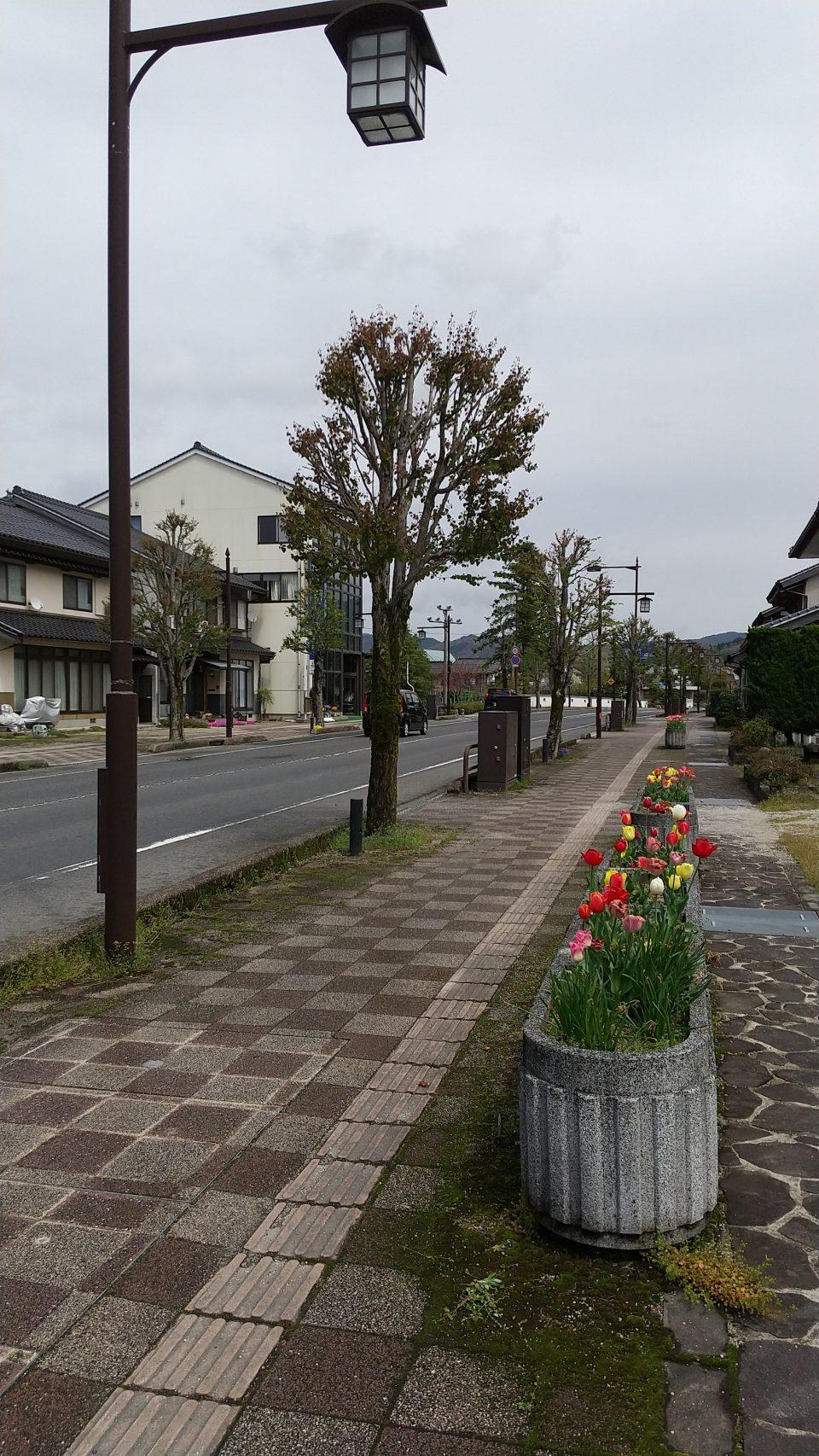 JR出雲横田駅前通りも花が咲きました。